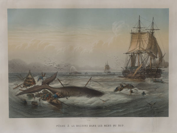 In the Heart of the Sea: stories of the whaling ship 'Essex'